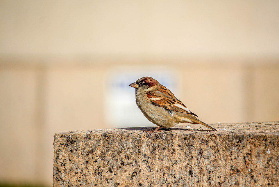 Международный день птиц отметят в Лианозовском парке