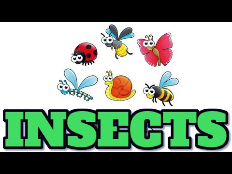 [Animal 20] Watch about INSECTS fact, you will be suprised