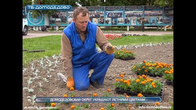 Домодедовский округ украшают летними цветами