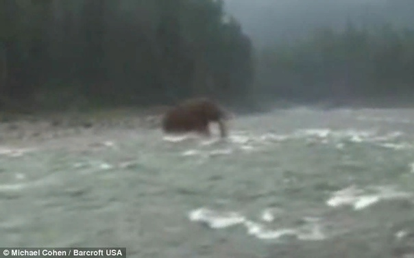 Сибирские мамонты живы до сих пор