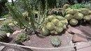 El Huerto Del Cura Gardens In Elche Spain