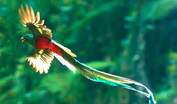 Кетцаль - птица свободы.