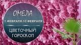 Цветочный гороскоп - Омела с 1.02 по 10.02
