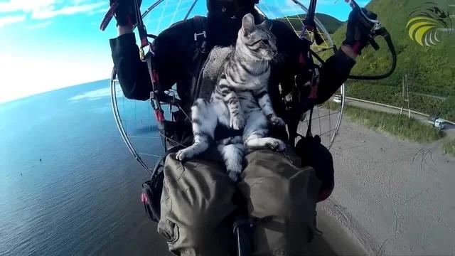 Покатайте кота на параплане   Cat PPG