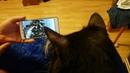 Реакция кота на видео / Reaction to Video Funny Cat