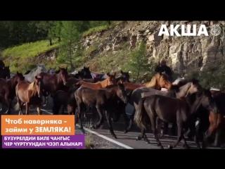 АКША - займы в Кызыле