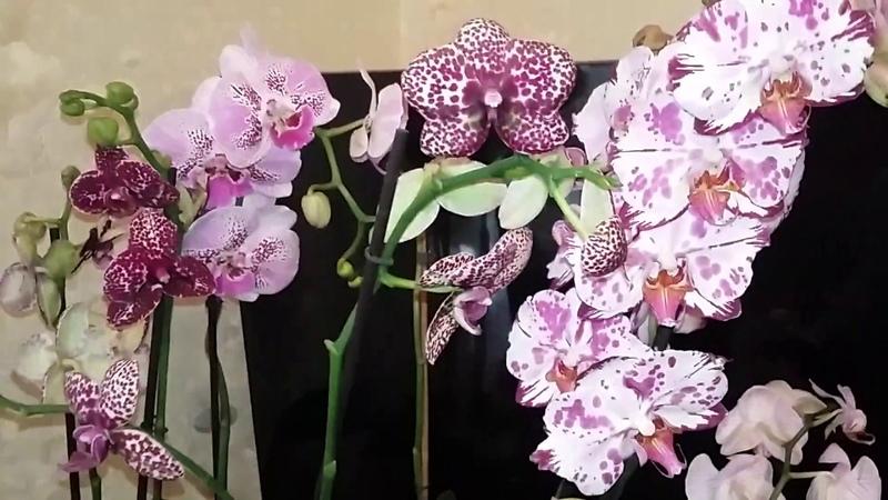 Секреты от цветовода про реанимашки как нарастить корни у погибающей орхидеи.