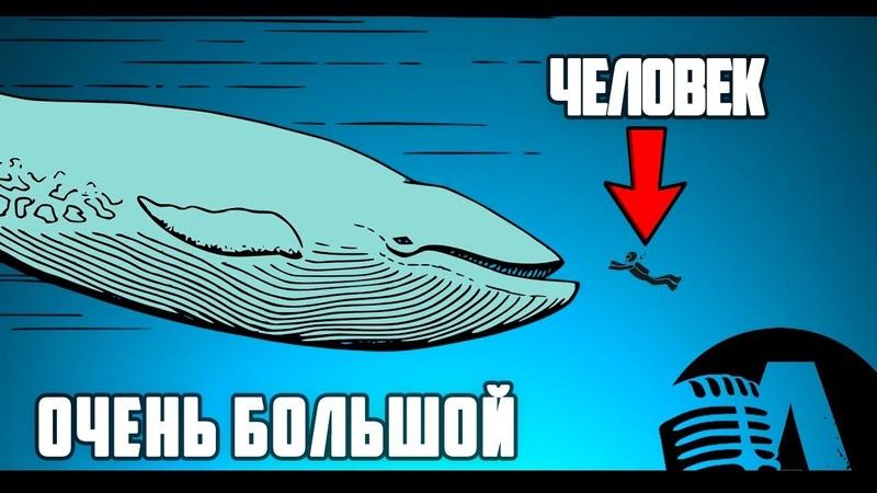 ГИГАНТЫ ВОДНОГО МИРА | RUS VOICE [НАУКА]