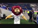 Lyou a relevé le défi des Mascottes organisé par la @ffhandball pour promouvoir l'EURO féminin de handball 29 novembre-16 décemb