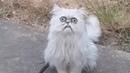 Weird looking cat