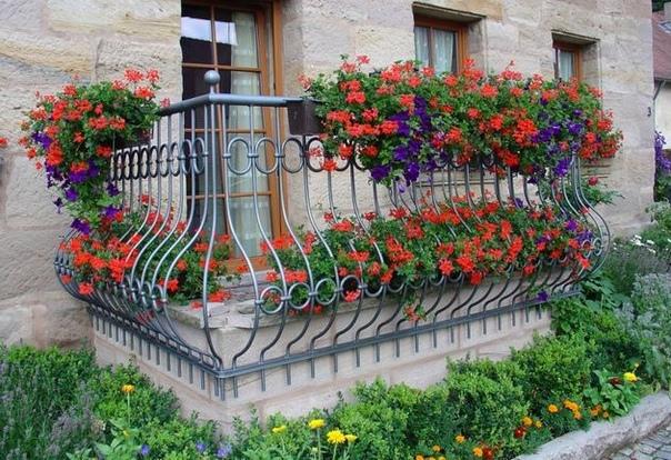 Цветы на балконе Городская жизнь и архитектура не всегда дает возможность каждому разбить прекрасный цветник так, как этого желает душа. А наличие балконов этот момент скрашивают, даруя своим