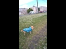 Ляля на прогулке