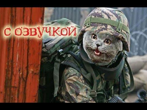 Приколы с котами – озвучка животных – Захват мира кота Мурзика – Domi Show