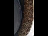 Что стало с пчелами в Camry