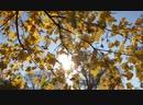 Осень 🍂 🍁❤️