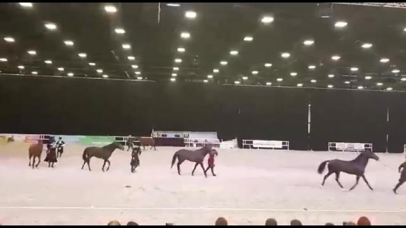 Легендарная кабардинская лошадь