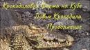 Крокодиловая Ферма на Кубе.Ловим крокодила.Продолжение.