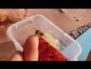 Спасение осы из арбузного озера 😍❤❤❤