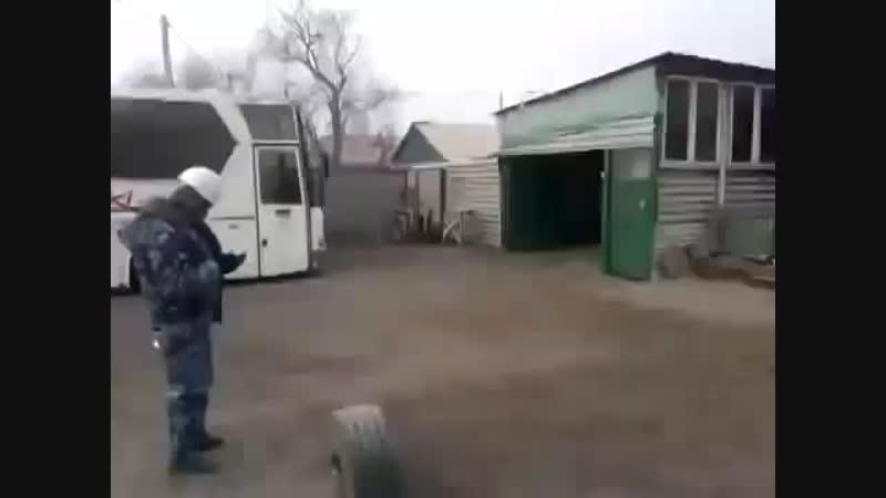 Джульбарс танцует