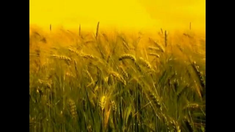 ORDO ROSARIUS EQUILIBRIO ~ Reaping the Fallen, the Second Harvest