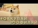 ОККУПАЙ-ЗООФИЛЯЙ (18 )