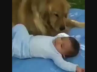 Need to protect this baby brother.mp4