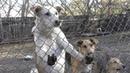 Подарок судьбы. Ульяновские волонтеры ищут друзей для 40 кошек и 70 собак
