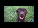 ДогПарк - любовь к собакам обязательна!