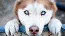 Самые преданные собаки в мире! Собаки верные друзья. Топ самых преданных животные, существа, породы