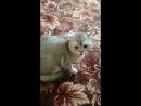 Бешеный кот 😾