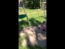Случайное видео и анекдот