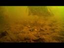 First light - Underwater feeder fishing - Breamtime S3 E9