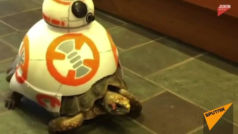 Черепаха и дроид