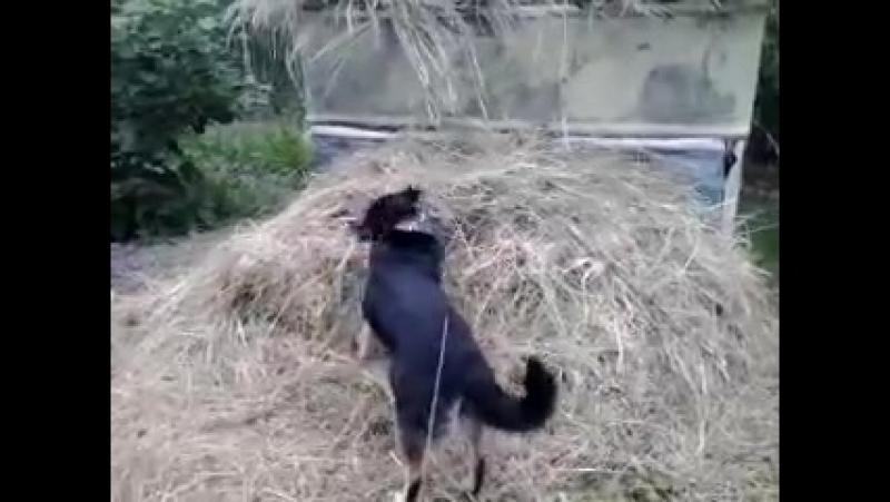 Мот любит сено. любит чесать спинку))