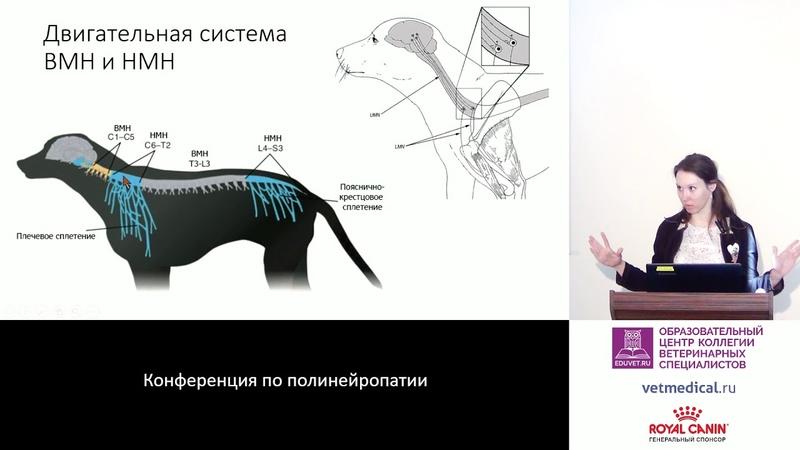 Парализованный пациент. Как отличить поражение периферической нервной системы и мышц?