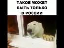Мишка на Севере😄