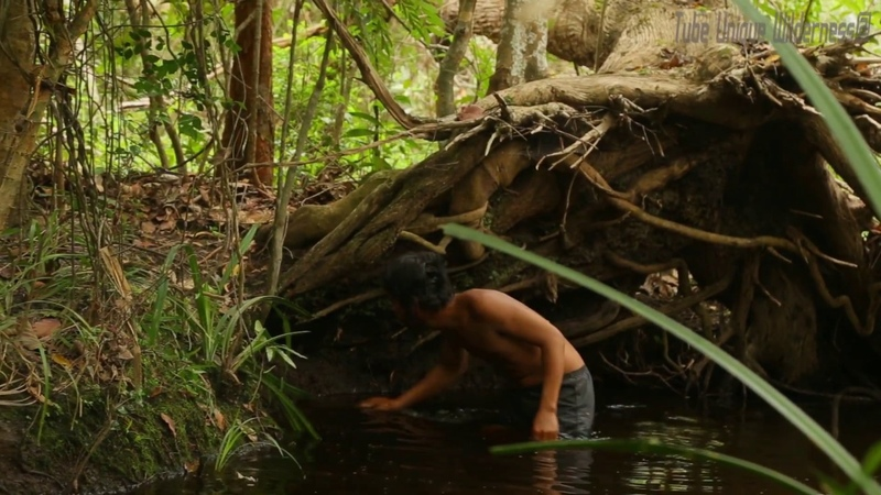 Terrifying! A brave man steal crocodile eggs In the deep forest - how to steal crocodile