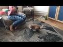 Рыжий котенок из Бирюлево