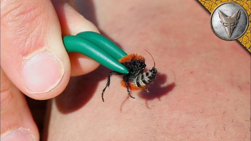 STUNG by a VELVET ANT!