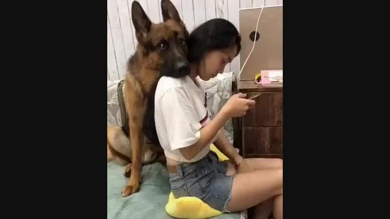 Заботливый и верный друг