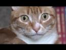 Жизнь кота после этого видео никогда не будет прежней