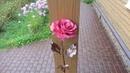 Бархатно розовая роза из меди