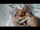как почистить уши сразу двум котам