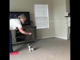 Служебная собака: дрессировка.😉