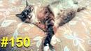 Обжора кот просит щадящий режим