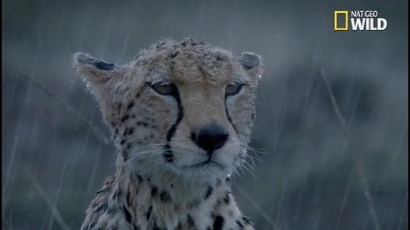 киса под дождиком