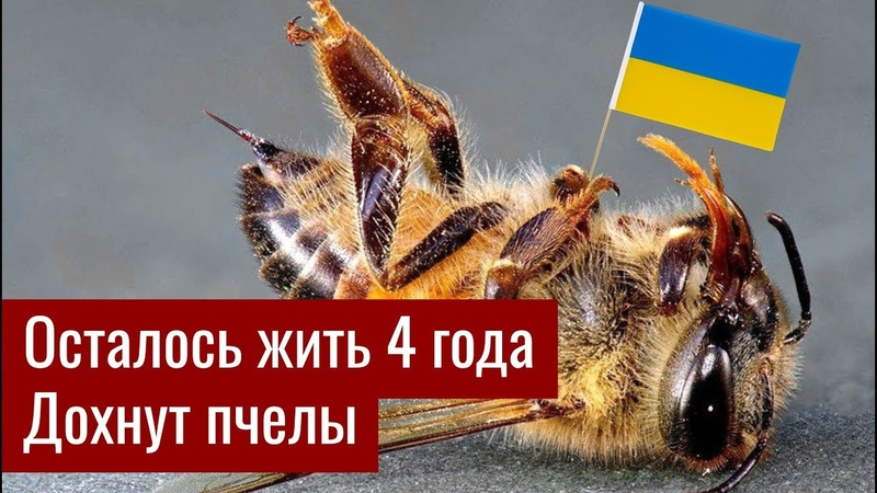Почему Украине осталось жить 4 года Массово дохнут пчёлы