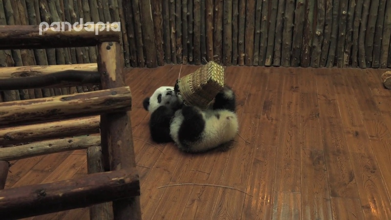 Panda Xiao Xin has a small pack basket