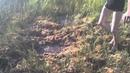 В болото