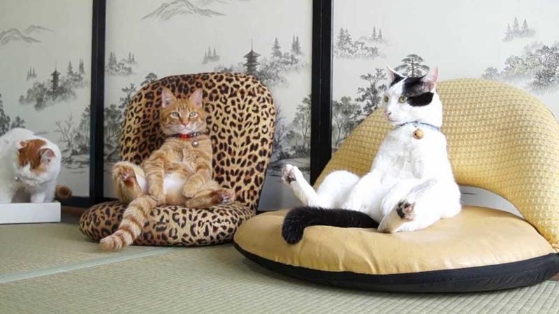 ПОПРОБУЙ НЕ ЗАСМЕЯТЬСЯ - Смешные Приколы и фейлы с Животными до слез, смешные коты 90